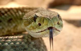На Прикарпатье змеи все чаще бросаются на людей