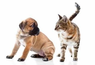 Американцы сравнили собак и кошек на «степень» любви к хозяевам