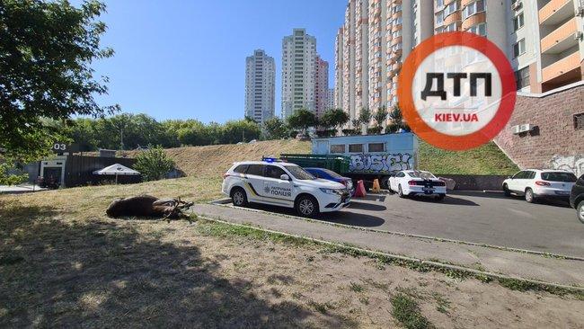 Лось, сбитый на одной из улиц Киева