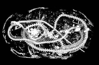 Британские ученые определили загадочное содержимое египетских мумий