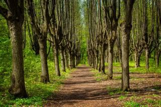 Ученые говорят, что деревья влияют на развитие IQ