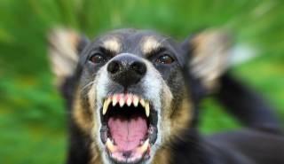 В Днепре собака вцепилась в лицо ребенку на детской площадке