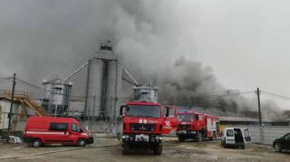 Несколько десятков тысяч свиней оказались в огненной ловушке на ферме в Прикарпатье