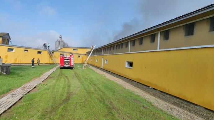 Пожар на свиноферме в с. Тустань Ивано-Франковской области