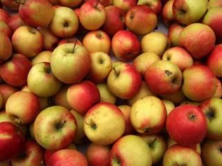 Китайский профессор раскрыл секрет: как есть яблоки, чтобы от них была польза