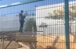 В Одессе произошел странный инцидент со львами