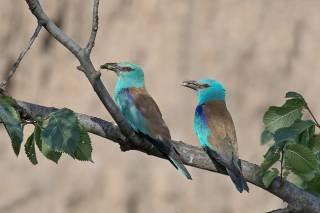 Как оказалось, пандемия коронавируса интересным образом сказалась на птицах