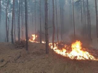 В Луганской области полыхает гигантский лесной пожар