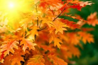 В начале следующей недели в Киев наконец-то вернется золотая осень