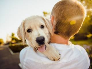 Ученые рассказали, различают ли собаки лица людей