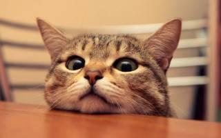 Британцы выяснили, как можно общаться с кошками
