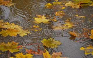 Стало известно, когда в Украине похолодает и пойдут дожди