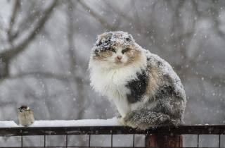Уже завтра на Украину обрушится снегопад