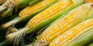 Стало известно, кому не стоит есть кукурузу