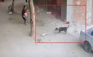 Появилось эпичное видео, как кот спал ребенка от злой собаки