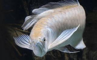 В Одессе детвора поймала очень редкую рыбину, которая водится в Амазонке