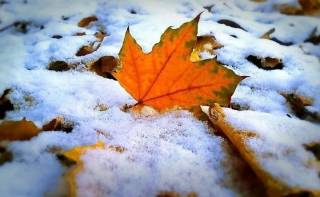 Синоптики поведали, где пойдет снег в начале следующей недели