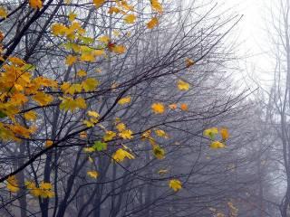 Стало известно, какой будет погода в Украине в последний день осени