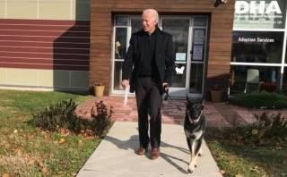 Байден получил двойной перелом, играя с собакой