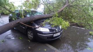 Советы автомобилистам: Что делать, если на машину упало дерево