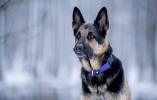 В Одесской области при задержании хулигана погибла собака