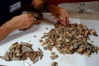 Ученые доказали, что первобытные люди имели представление о похоронах десятки тысяч лет назад
