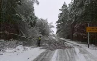 Сотни поваленных деревьев и обесточенные поселки: непогода принесла на Черниговщину немало бед