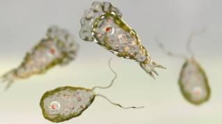 Американские ученые зафиксировали опасную миграцию микроорганизмов, пожирающих человеческий мозг