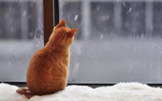 На выходные в Украине похолодает, пойдет снег