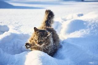 Украинские дороги засыпало снегом
