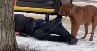 В Харькове пес пытался оттащить домой спящего на земле пьяного хозяина, чтобы тот не замерз