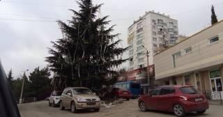 В аннексированной Ялте главную елку украсили туалетной бумагой