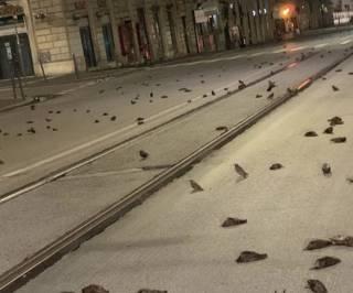 Итальянцы на радостях убили сотни птиц в Риме