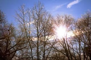 На выходные в Украину вернется настоящая весна