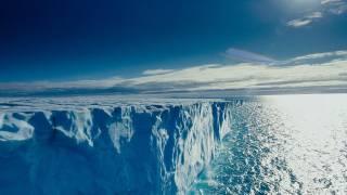 Ученые бьют тревогу: опасный сорняк добрался до Арктики