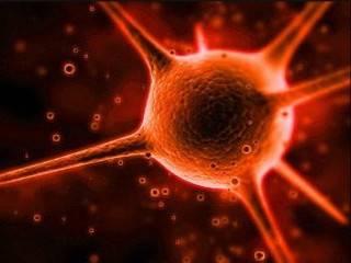 Ученые установили механизм долгосрочного иммунитета от коронавируса