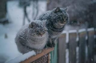 На выходные в Украине будет холодно и сыро