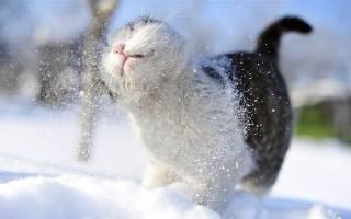 В ближайшие дни в Украине ожидаются снегопады