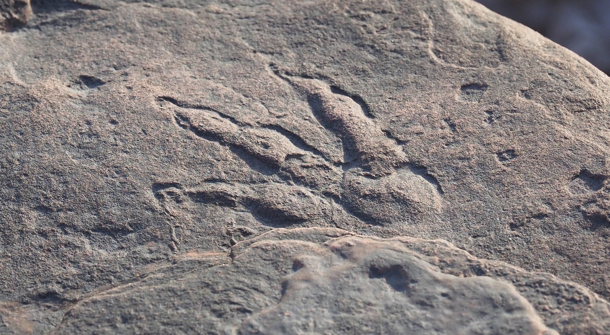 След стопы динозавра, обнаруженный на пляже в Уэльсе