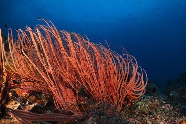 Гибкий коралл
