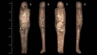 Мумия, более ста лет пролежавшая в австралийском музее, оказалась крайне необычной