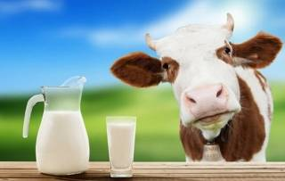 Стало известно, кому противопоказано коровье молоко