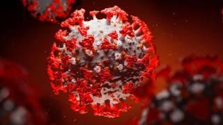 По данным американских ученых, коронавирус стал в 8 раз заразнее