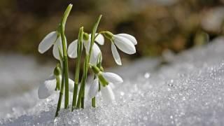 Синоптики обещают, что начало весны порадует украинцев теплом