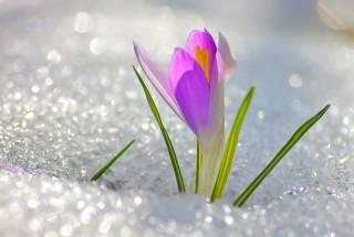 Погода готовит неприятный сюрприз на 8 марта