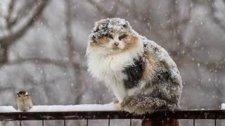 К концу недели в Украине повалит снег и ударят морозы