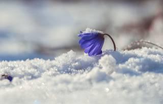 Стало известно, когда в Украине наконец-то наступит весна