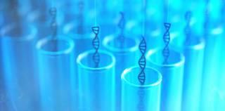 Австралийцы создали из клеток кожи модель эмбриона человека