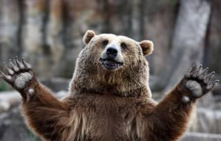 В США медведи умирают от очень странной болезни