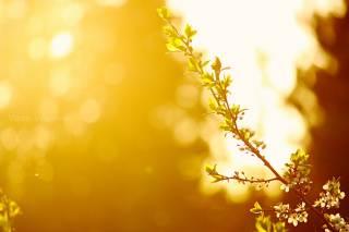 В начале следующей недели в Украину наконец-то вернется весна
